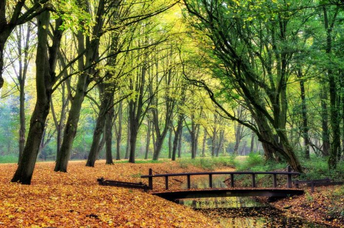 Amsterdamse-bos--1132x670.jpg