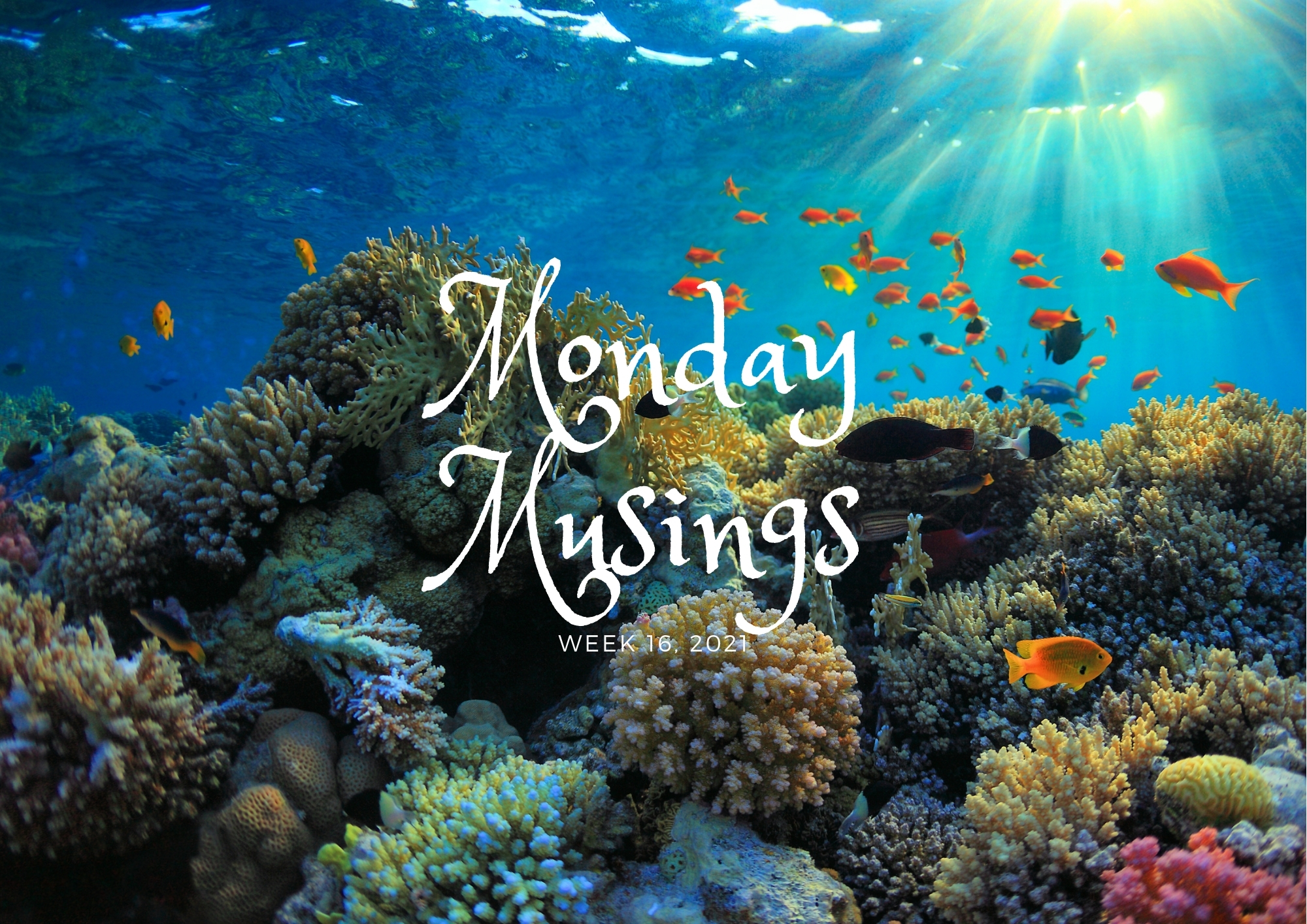 Monday Musings (16)